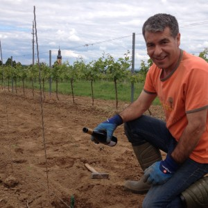 Manuel Rebenpflanzung